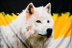 "Имперский флаг ""Волк"" фото"